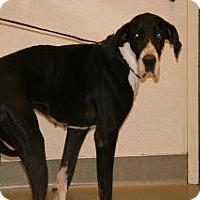 Adopt A Pet :: Precious - Wildomar, CA