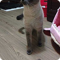 Adopt A Pet :: Wendy - Mackinaw, IL