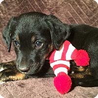Adopt A Pet :: Hank - Kittery, ME