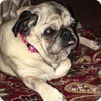 Adopt A Pet :: Clarissa - Grapevine, TX