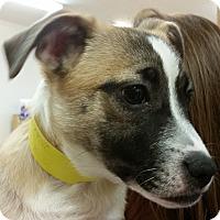 Adopt A Pet :: Lorelai (PUPPY) - Alpharetta, GA