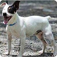 Adopt A Pet :: John Boy - Thomspn, CT