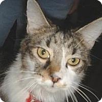 Adopt A Pet :: Tou-tou - Miami, FL