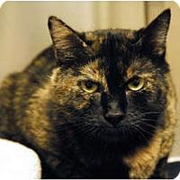Adopt A Pet :: Charlotte - Lunenburg, MA