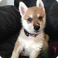 Adopt A Pet :: Nellie - Saskatoon, SK