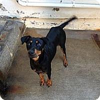 Adopt A Pet :: Misha - Santee, CA