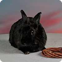 Adopt A Pet :: Medina - Marietta, GA
