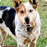 Adopt A Pet :: Freckles - Marina del Rey, CA