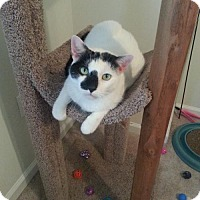 Adopt A Pet :: Natalie - Jersey City, NJ
