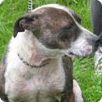 Adopt A Pet :: Ginger D32 - Mineral, VA