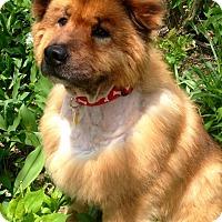 Adopt A Pet :: Ari - Fennville, MI