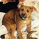 Adopt A Pet :: Dew Pup Tiberius