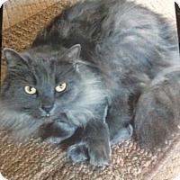 Adopt A Pet :: Gracie - Monroe, GA
