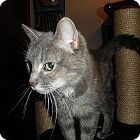 Adopt A Pet :: Lilah - Milwaukee, WI