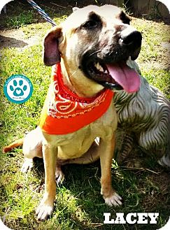 German Shepherd Dog Mix Dog for adoption in Kimberton, Pennsylvania - Lacey