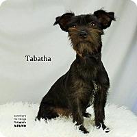 Adopt A Pet :: Tabatha - Spring, TX