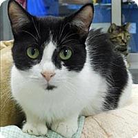 Adopt A Pet :: Wheezy - Topeka, KS