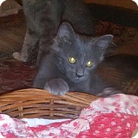 Adopt A Pet :: Ruger - Tampa, FL