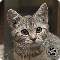 Adopt A Pet :: Mimi - Troy, OH