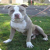 Adopt A Pet :: *SARGE - Oakdale, CA