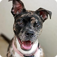 Adopt A Pet :: SINORA - Kyle, TX