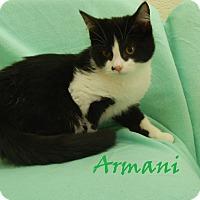 Adopt A Pet :: Armani - Bucyrus, OH