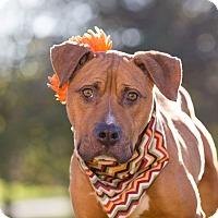 Adopt A Pet :: River - Flint, MI