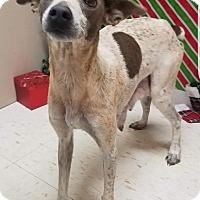 Adopt A Pet :: Melody - Pompton Lakes, NJ