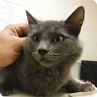 Adopt A Pet :: POOTER - Oroville, CA