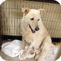 Adopt A Pet :: Lexi's Levi aka Freckles - Las Vegas, NV
