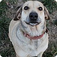 Adopt A Pet :: Darling Darla - Wytheville, VA
