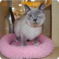 Adopt A Pet :: Happy Go Lucky - Modesto, CA