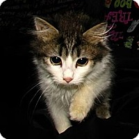 Adopt A Pet :: Minnie - Norwich, NY