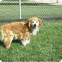 Adopt A Pet :: Flossy - Meridian, ID