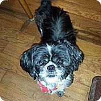 Adopt A Pet :: Max - Plainfield, IL