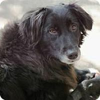 Adopt A Pet :: Bliss - Austin, TX