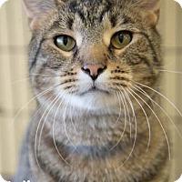 Adopt A Pet :: Kudos - Merrifield, VA