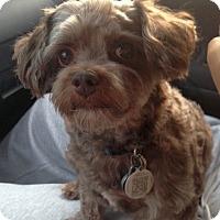 Adopt A Pet :: Cadbury - Mississauga, ON