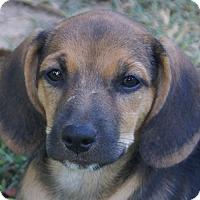 Adopt A Pet :: Triplet - Plainfield, CT