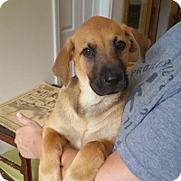 Adopt A Pet :: Abby in CT - Manchester, CT