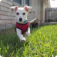 Adopt A Pet :: Gary - Aurora, CO