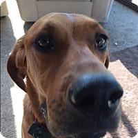 Adopt A Pet :: ZOA - Ruby - Aurora, IL