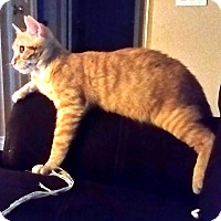 Adopt A Pet :: Manny - Orange, CA