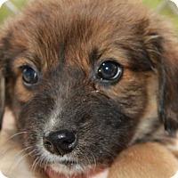 Adopt A Pet :: Hook - Danbury, CT