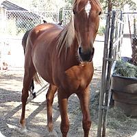 Adopt A Pet :: Rhett - El Dorado Hills, CA