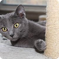 Adopt A Pet :: Misty - Media, PA