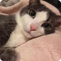 Adopt A Pet :: Barney - San Carlos, CA