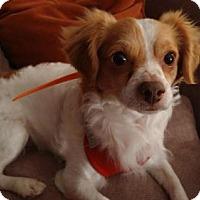 Adopt A Pet :: Squire - Denver, CO