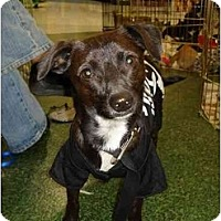Adopt A Pet :: Peanut - Fowler, CA