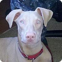 Adopt A Pet :: Stubby - Santee, CA